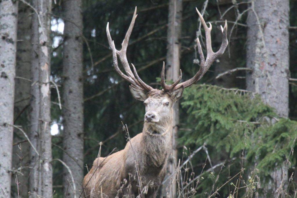 Jagdreisen – Jagdurlaub im Via Salina