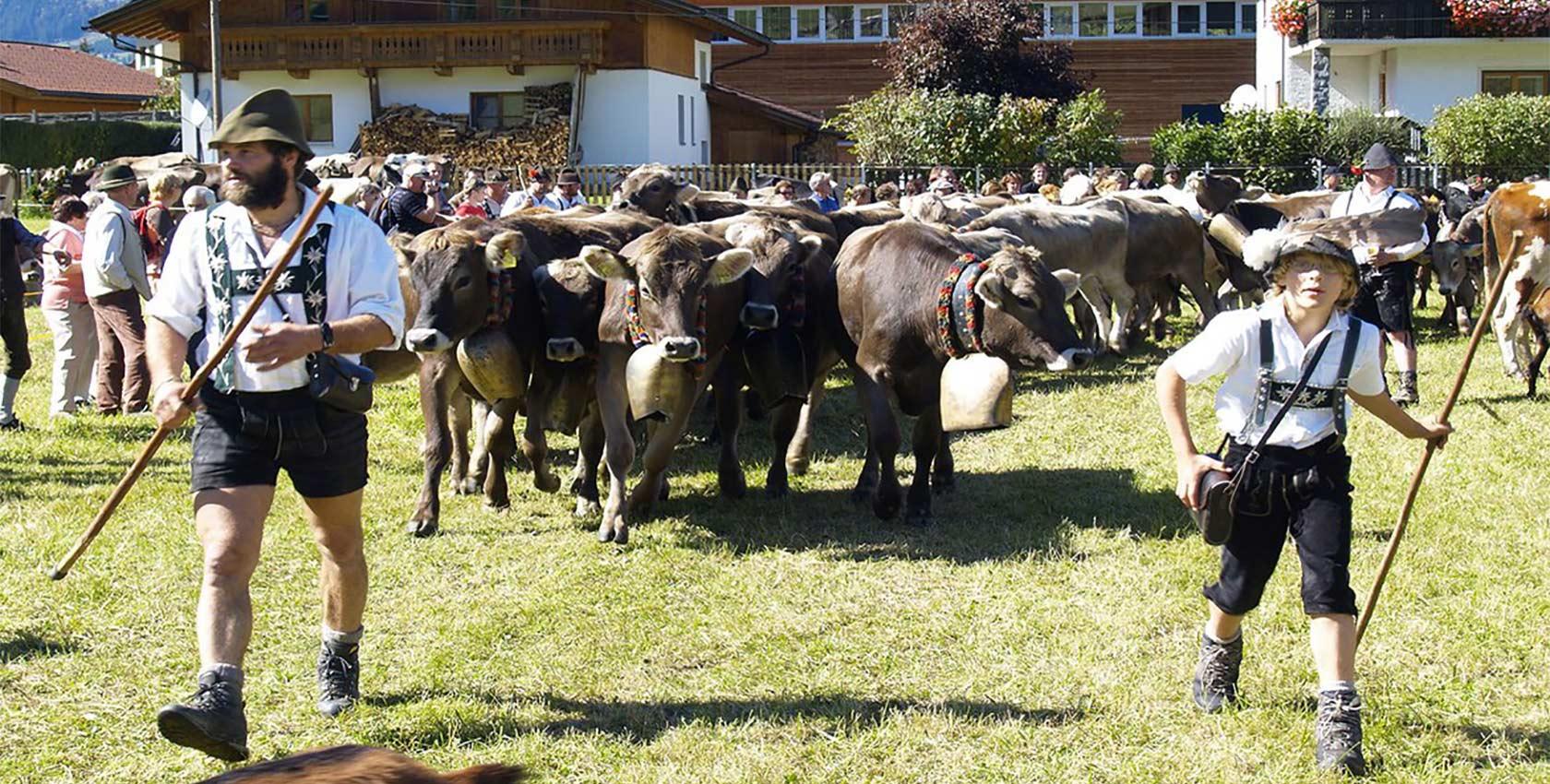 Allmabtriebe im Urlaub in Tirol Tannehimer Tal
